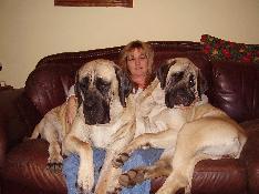 Mountainview Mastiffs